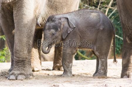 zwierze ssak slon zwierzeta zwierzatka ssaki