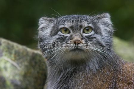 zwierze ssak zwierzeta zwierzatka koty ssaki