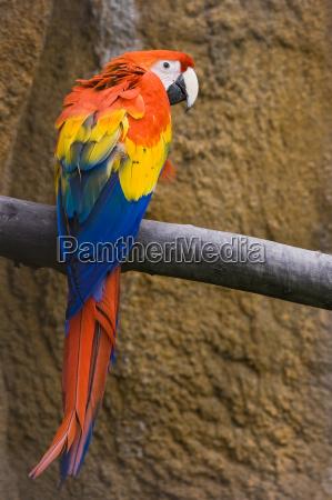 ptak ptaki pioro przyrody tropikalnych tropikalny