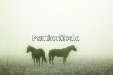 konie prairie