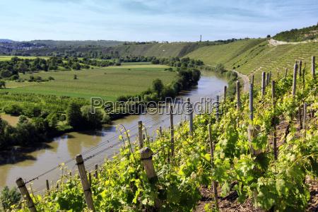 weinanbau winnica rezerwat przyrody srodziemne rebstock