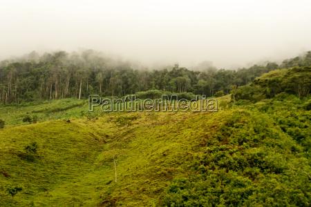 drzewo drzewa dzungla wylesianie amazonka lasow