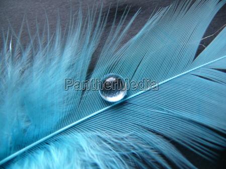 niebieskie pioro z duza kropla wody
