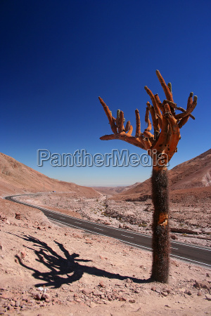 park narodowy chile kaktus andy