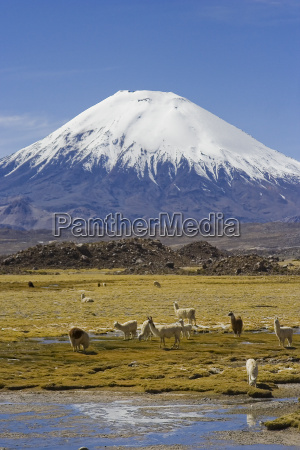 park narodowy chile wulkan lauca parinacota