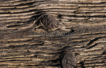 drewno drewna brazowy brazowe brunetka tworzywo