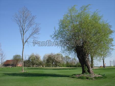 zielony golf golfiarz zielone zielona