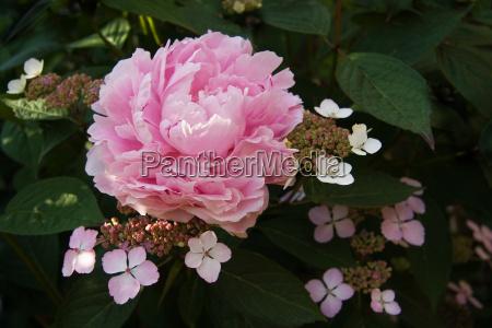 park ogrod ogrodek kwiat kwiatek zawod
