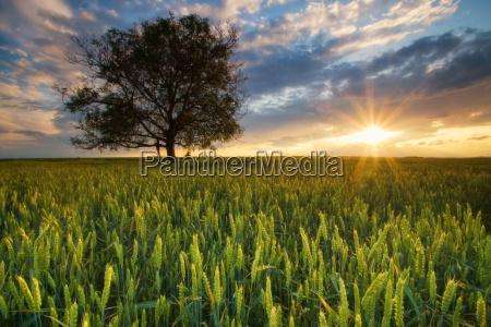 sunshine w dziedzinie