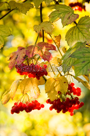 yellow zolty wypasc jesien