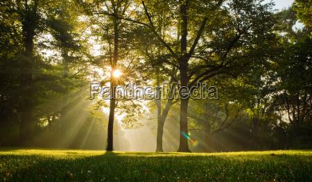 drzewa w podswietlenie