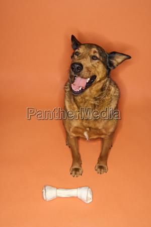 mixed breed dog with bone