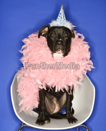 dog in party hat and feather