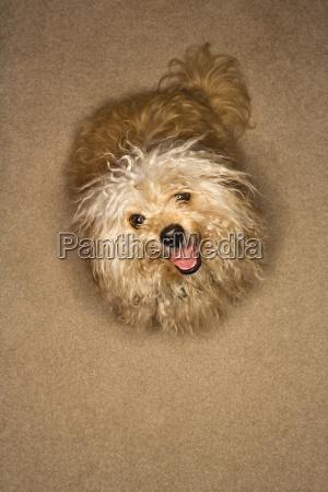 cute mutt dog