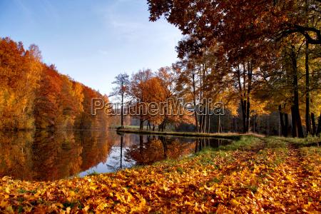 jesien w stawie rybnym
