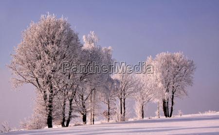 drzewo drzewa zima zimowy szron snieg