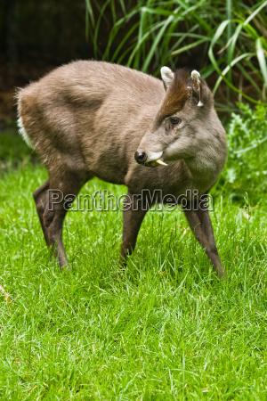 zwierze ssak zwierzeta zwierzatka ssaki rotwild