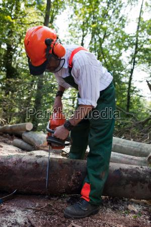 drzewo drzewa spasc waldarbeiter upadl rejestratory