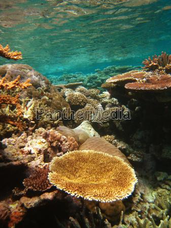 podwodne sceny z wielkiej rafie koralowej