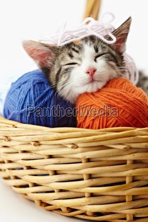 kot gra z przedzy
