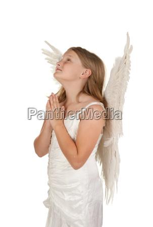 mlody aniol modlac sie na bialym