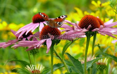 zwierze owad kwiat kwiatek kwiaty kwiatki