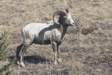 relaks zwierze zwierzeta zwierzatka pole zrelaksowany