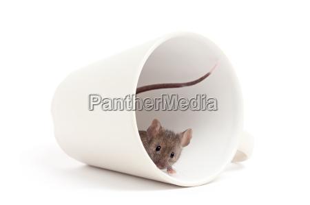 filizanka nager gryzon mysz brudny prowokacyjny