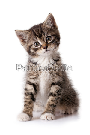 maly kociak