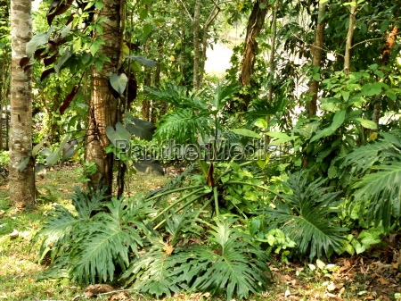 ogrod ogrodek azja tajlandia ogrody garnek