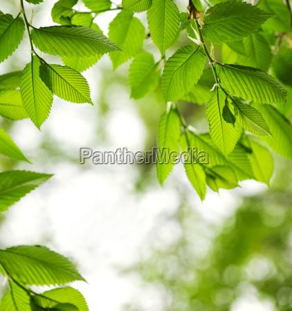 zielone, liście, wiosna - 3845702