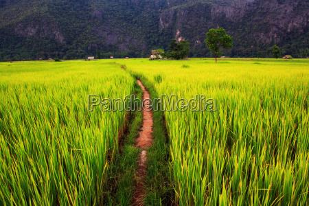 rolny gospodarstwo rolnictwo kornfeld pole ryzowe