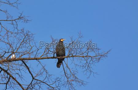 drzewo firmament niebo sklepienie