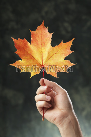 a hand holding an orange autumn