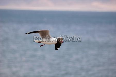 ptak suesswasser jezioro inland aqua wodne