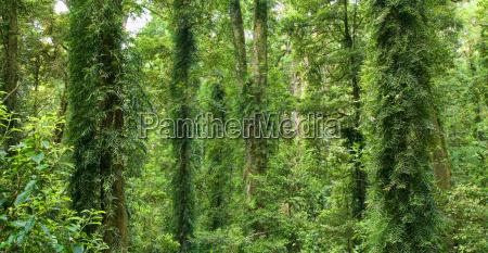 beautiful dorrigo world heritage rainforest