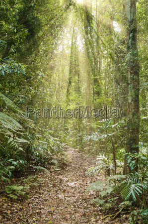 rays of light in the rainforest