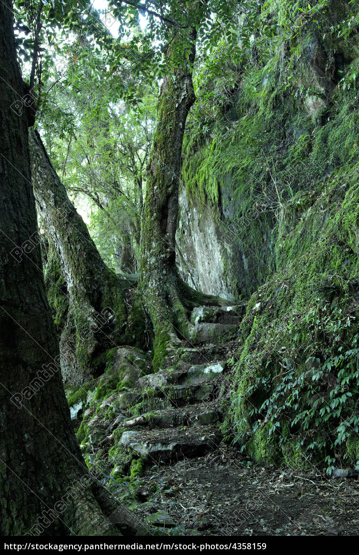 path, through, the, rainforest - 4358159