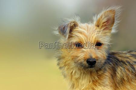 zwierze zwierzeta zwierzatka pies psy berlin