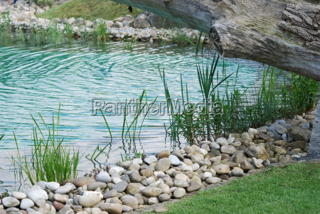 wodny roslina roslinny ogrod roslina staw