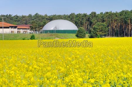 biogazownia rapsfeld plany biogazu rzepaku pole