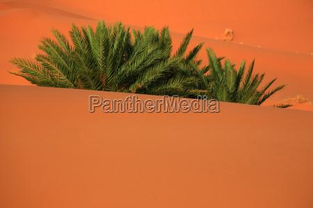 pustynia wydma maroko sahara karavane erg