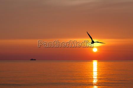 seagull przed wschodzacym sloncem nad morzem
