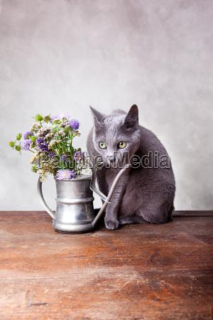 still life portret potrait kwiat kwiatek