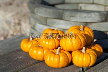 dekoracja ozdobne pazdziernik country sezon zierrat