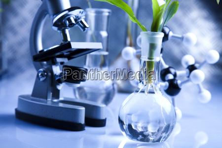 naczynia laboratoryjne zawierajace rosliny w laboratorium