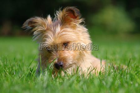zwierzeta zwierzatka pies psy szczeniak szczenia