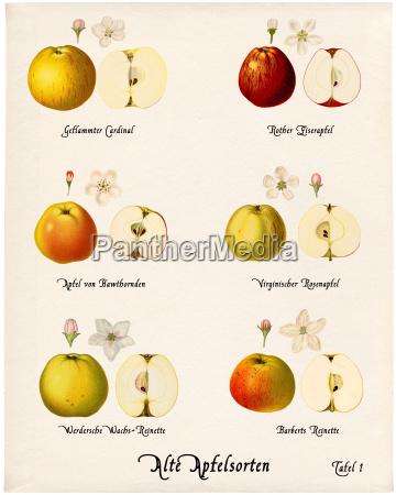historyczny jablka jablka jablko jablko kolaz