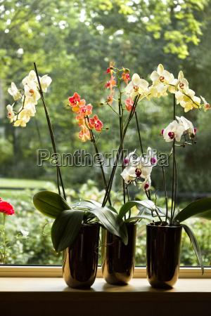 kwiat kwiatek zawod roslina okno szyby