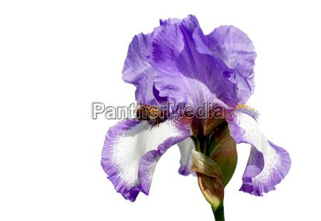 opcjonalne owad kwiat kwiatek zawod roslina